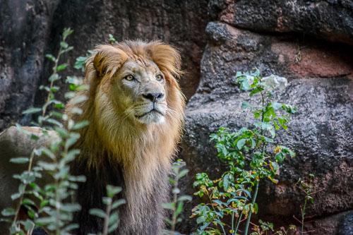 kl-20130920-atlanta-zoo-0043.jpg