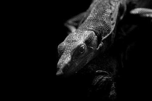 kl-20150907-atlanta-zoo-0011.jpg