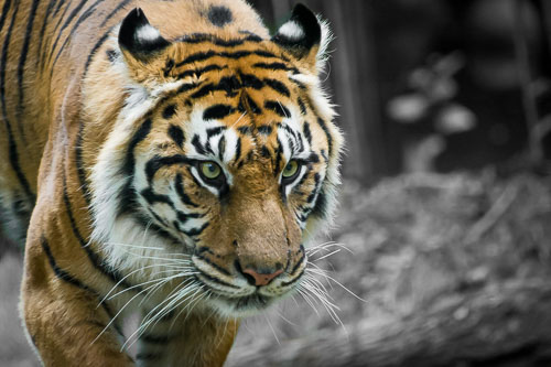 kl-20151031-zoo-atlanta-0084.jpg