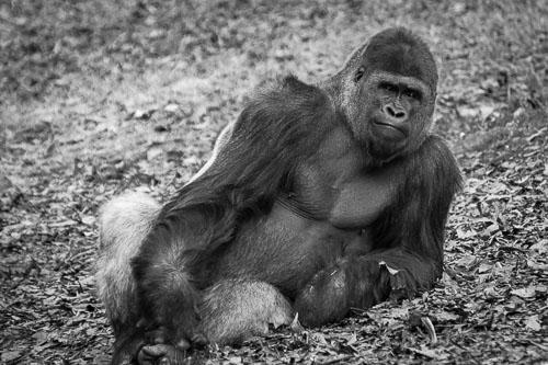 kl-20160107-zoo-atlanta-0049.jpg